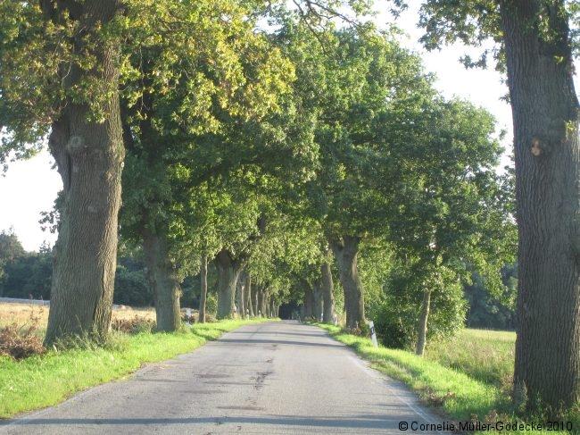 Landstrasse in Ostvorpommern