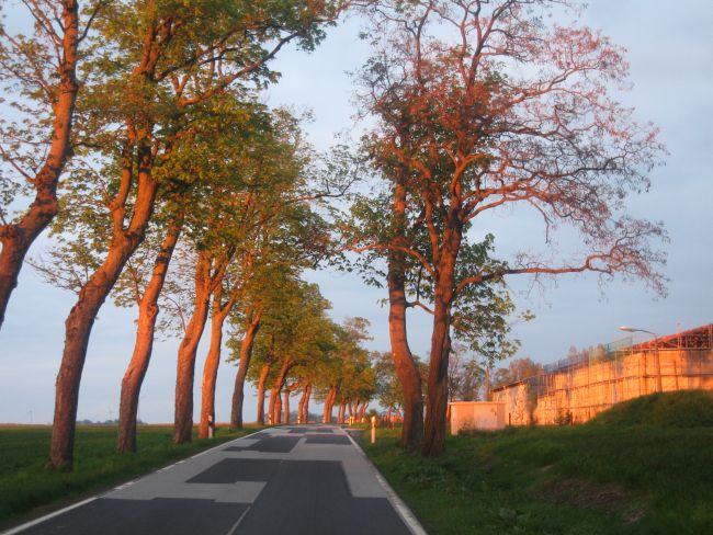 Allee bei Quilow