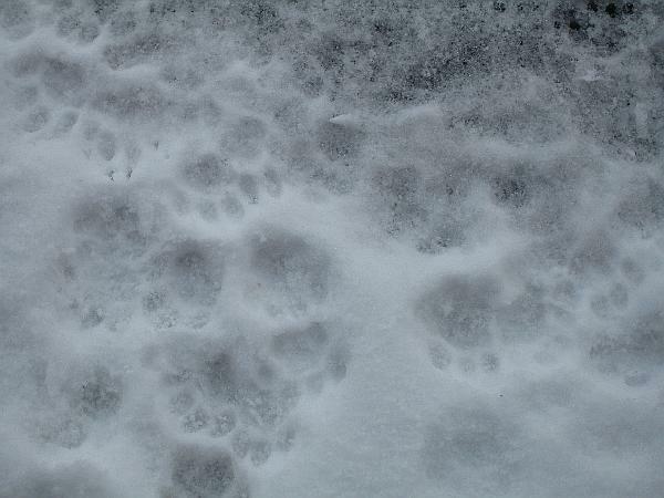 Katzenspuren