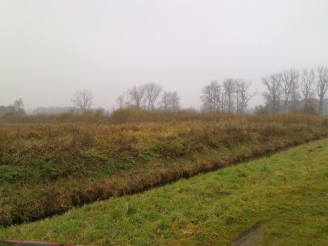 Peene Moor