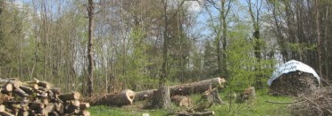 Der Baumbestand des kleinen Guts-Parks ist ungepflegt