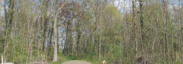 Lieblos ausgeholzt, läßt sich die Park-Anlage nicht mehr erkennen